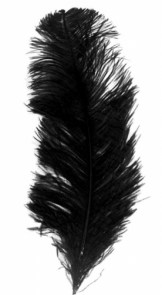 "Plume d'autruche ""Ostrich feather"""
